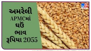 Wheat price in Amreli APMC remained at Rs. 2055, find out the prices of different crops