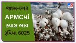 Cotton prices in Jamnagar APMC stood at Rs 6025, find out the prices of different crops