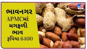 In Bhavnagar APMC, the price of groundnut remained at Rs. 6400, find out the prices of different crops