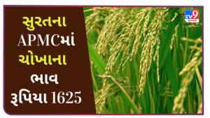 Rice price in Surat APMC remained at Rs. 1625, find out the prices of different crops