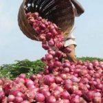 mahuva onion