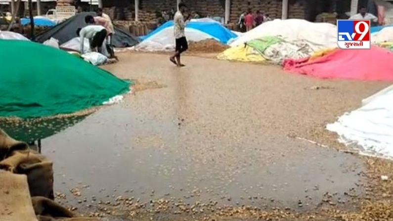 Morbi: Farmers angry over peanut and coriander soaking in Halwad marketyard, demand compensation