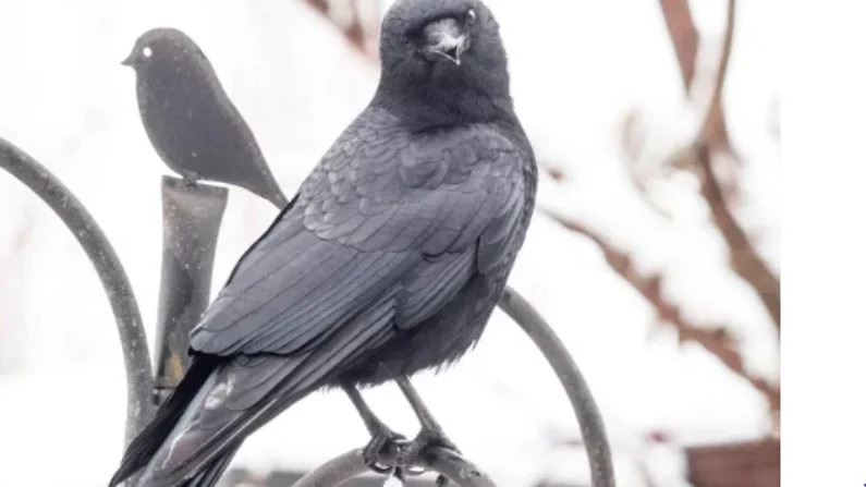 george-and-mabel-crows-love-story-inspired-to-people
