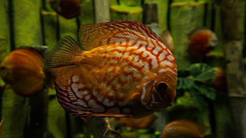 આ એક્વેટિક ગેલેરી  (Aquatics Gallery) માં દુનિયાના વિવિધ મહાસાગરો, ઝોનમાંથી વિશિષ્ટ પ્રકારની 188 પ્રજાતીની 11,690 માછલીઓનો સમાવેશ કરવામાં આવ્યો છે.આ એક્વેટિક ગેલેરી રાજ્યના બાળકો અને યુવાનોની જિજ્ઞાસાને વધુ પ્રબળ બનાવશે.